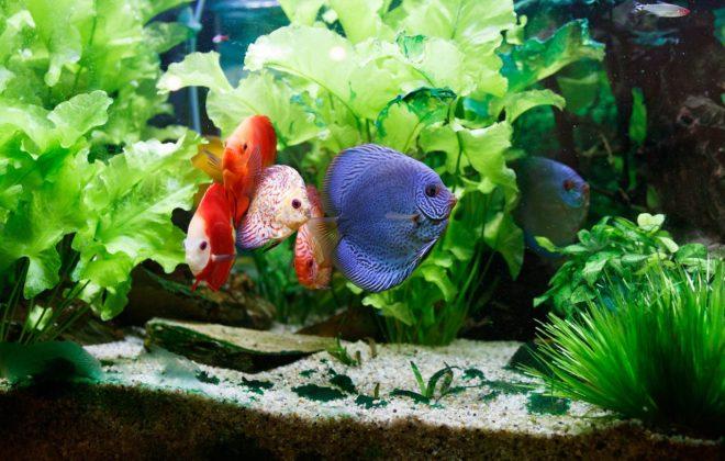 Décorez votre pièce avec un aquarium
